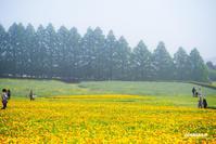 ☆ 高原の花畑 ☆ - Trimming