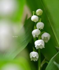 入院前のお庭 と お気に入りのチャーハン - my story***