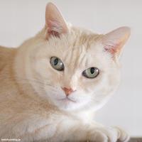優雅なポンコさま - 賃貸ネコ暮らし|賃貸住宅でネコを室内飼いする工夫