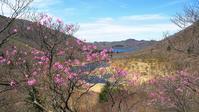 美し過ぎるアカヤシオ・・・赤城山・鳥居峠(2) - 『私のデジタル写真眼』