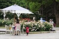 rose garden 3 - aco* mode