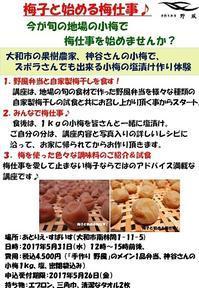 「梅子と始める梅仕事♪」受付申し込みは本日まで! - 手作り弁当 野風