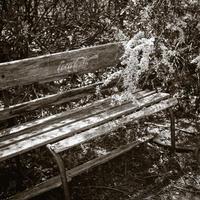 ベンチで語らう白い藤とヒカリトカゲ - Film&Gasoline