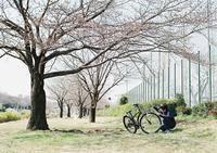 河原の桜-2- - ayumilife with kate