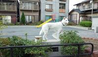 Vol.1183 神明町公園 - 小太郎の白っぽい世界