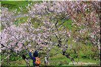 今日の平岡梅林公園 - 北海道photo一撮り旅