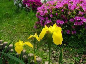 市民の森の花 - 彩の気まぐれ写真
