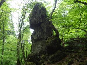 英彦山探検隊・・サルメンエビネ - 信ちゃんの美夜古たより