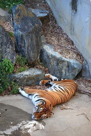 バタンキュー - 動物園写真館