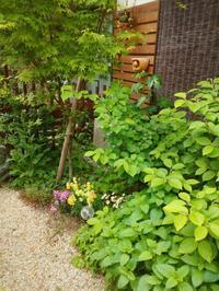 庭が気持ち良い - カットとヘナの家 ガーデニング美容師の日記