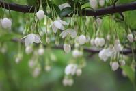 雨には白い花がよく似合う、と思わない? - 万願寺通信