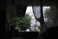 曇りの日曜日に朝顔が咲きました。 - 生きる歓び Plaisir de Vivre。人生はつらし、されど愉しく美しく