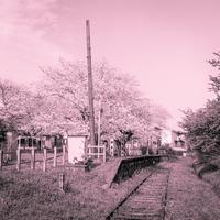2017年5月18日 列車は来ずとも春は来る - Silver Oblivion