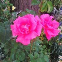 花盛り - La Pousse(ラプス) フラワーアレンジメント教室