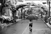 雨の中 都電砂町線跡を辿る - デジカメ持ってING