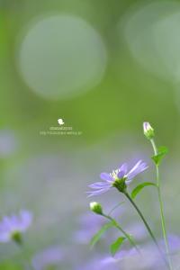痒い 痒い 痒い - お花びより