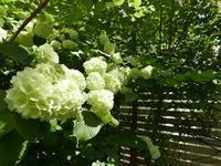 集英社「OurAge」連載コラム5月 - la fleur ラ・フルール