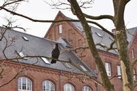 北欧旅行 その2 - 瑞穂の国の野鳥たち