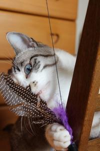 ネコの不満 - ぎんネコ☆はうす