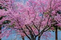 華麗に咲く - 光のメロディー