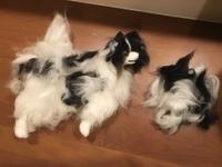 店長の日記〜猫の留守番〜 - トリミングサロンオリーブスタッフ日記