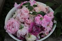 今日の花がら摘み -2015年5月18日- - まとまりの無い庭 excite版