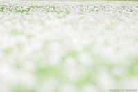 幸せの佇む庭 - ひつじ雲日記