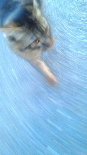 最近猫に、、、 - Beautiful Japan 絵空事