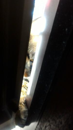 このニャン子、、、ドアの隙間から~ ・゚☆、。・:・゚`☆・・゚ - Beautiful Japan 絵空事