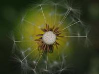風に負けないよう - 1/365 - WEBにしきんBlog