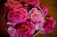 薔薇ジュースの作り方ポイント(閲覧注意、かも) - 世話要らずの庭