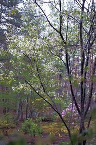 ジューンベリーと陽光桜 - Happy Homes & Gardens