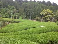 今日もお茶刈り〜 - にじまる食堂 & にじまる農園