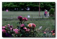 稲沢公園にて - 気まぐれフォト