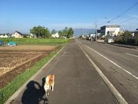 春の水鏡 - 柴犬さくら、北国に生きる