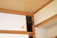 猫の人見知りは治る? - きょうだい猫と仲良し暮らし