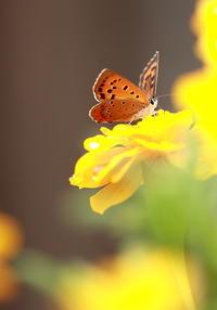 花と蝶 - 初心者と友に! 徹のうろチョロ写真館