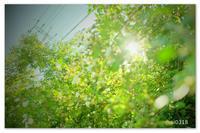 空と電線と緑。 - Yuruyuru Photograph