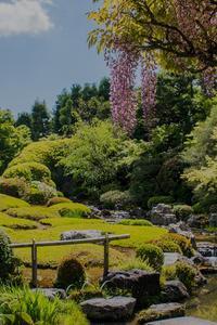退蔵院の季節の花と青もみじ - 鏡花水月