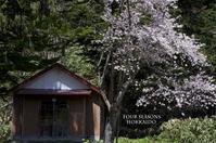 桜残雪ニセコドライブ - ekkoの --- four seasons --- 北海道