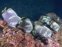ウミウシから、回遊魚まで・・絶好調です(^^)v - 八丈島ダイビングサービス カナロアへようこそ!