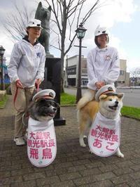 秋田犬 駅長になる - パームツリー越しにgood morning        アロマであなたの今に寄り添うブログ