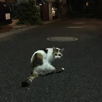 夜中のちゅーる - ぶつぶつ独り言2(うちの猫ら2017)