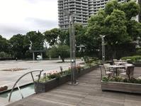 青葉 - 花咲く俳句日誌