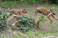 なぜこける - 動物園へ行こう