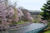 聖台ダムの桜~5月の美瑛 - My favorite ~Diary 3~