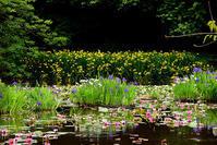 勧修寺 初夏の花 - ちょっとそこまで