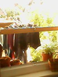 夏みたいな日和とすぎな - コルマール街暮らし