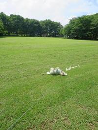 大好きな公園*^^* - おぽログ♪