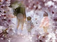 圧倒的桜。2017*** - RING ring  !
